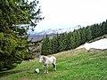 Кончето Борко от хижа Амбарица - panoramio.jpg