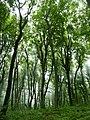 Лес на северном (сторона Железноводска) склоне горы Бештау.jpg