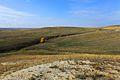 Овраг с ручьем - panoramio.jpg