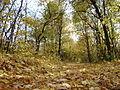 Осень в Горожанке.JPG