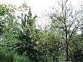 Парк шума Гази Баба во мај (3).JPG