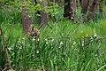 Природен резерват Балтата.jpg
