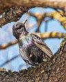 Птица2.jpg