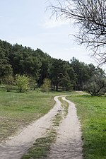 Пустыри в лесу возле с. Мешково-Погорелово.jpg