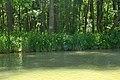 Резерват Камчия край брега на реката.jpg