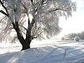 У Десны зимой. - panoramio.jpg