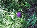 Цветок в Орловой роще.jpg