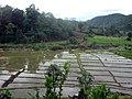 ทุ่งนาฤดูฝนที่ปาย -Rainy Season @Pai - panoramio.jpg