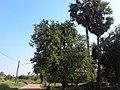หมู่บ้าน นาพิพาน ต.ปะโค เมือง หนองคาย - panoramio (22).jpg