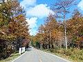 せせらぎ街道 - panoramio.jpg