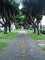 屏東市瑞光路旁的小公園.JPG