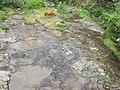 平板溪上的牛 - panoramio.jpg