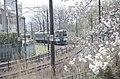 桜のなかを走る列車、柴田にて A train through the Cherry Blossoms in Shibata - panoramio.jpg