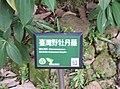 植物園中的植物及樹木花草(包括歷史遺跡)-44.jpg
