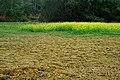 英德田园之旅 - panoramio (3).jpg