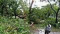 高雄市公園內的樹枝在莫蘭蒂侵襲時折斷,樹木連根拔起.jpg