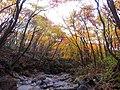 한라산의 가을 둘레길2.jpg