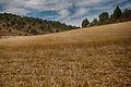 006841 - Provincia de Soria (8106260840).jpg
