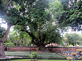 033Alte Bäume.jpg