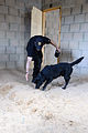 131st Military Working Dog Detachment device detection training 130611-A-HE359-040.jpg