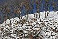 13 оленей.jpg