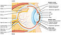1413 Structure of the Eye.jpg