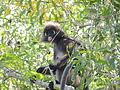 1 Monkey 5.JPG