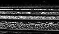 2005-08-28 - London - Honor Oak Park Rails (4887660253).jpg
