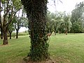 2015-05-21 Mantova, fiume Mincio 16.jpg