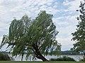 2015-05-21 Mantova, fiume Mincio 17.jpg