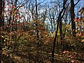 2015-11-15 09 43 23 Late autumn foliage in the woodlands along the West Branch Shabakunk Creek in Ewing, New Jersey.jpg