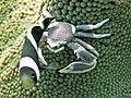 2015 09 Bali 44 crab and fish (21905375128).jpg