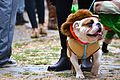 2015 Hallowenn dog costume party 4.jpg
