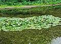 2018-06-18-bonn-meckenheimer-allee-169-botanischer-garten-17.jpg