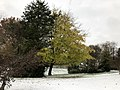2018-11-15 08 49 45 A snow and sleet covered Red Maple along Ladybank Lane in the Chantilly Highlands section of Oak Hill, Fairfax County, Virginia.jpg