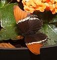 2019-04-15 13-03-07 jardin-papillons-hunawihr.jpg