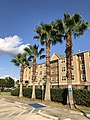 2019-07-19 19 01 21 Palm trees along Katy Mills Parkway in Katy, Fort Bend County, Texas.jpg