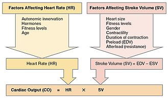 Cardiac output - Image: 2031 Factors in Cardiac Output