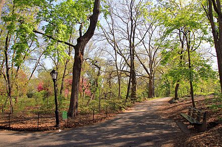 Wooded area of the Ramble 2886-Central Park-The Ramble.JPG