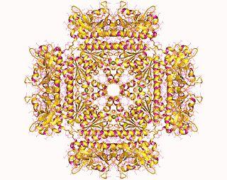 Phosphoribosylaminoimidazolesuccinocarboxamide synthase class of enzymes