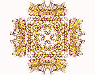 Phosphoribosylaminoimidazolesuccinocarboxamide synthase - Phosphoribosylaminoimidazole succinocarboxamide synthetase oktamer, Human