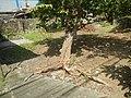 3428Poblacion, Baliuag, Bulacan 35.jpg
