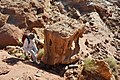 36 Ibex Canyon Lookout - Interesting Boulders - panoramio.jpg