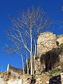454 Torre de Túbal, al castell de la Suda (Tortosa), des de la Costa dels Capellans.JPG