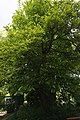 46-101-5023 Львів магнолія.jpg