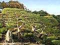 6 Chome-16 Honkomagome, Bunkyō-ku, Tōkyō-to 113-0021, Japan - panoramio.jpg