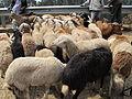ADDIS ABABA, ETHIOPIA CATTLE MARKET.JPG