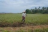 A farmer in Kerala 01.jpg