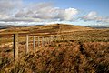 A fence leading to Rough Knowe - geograph.org.uk - 1503634.jpg