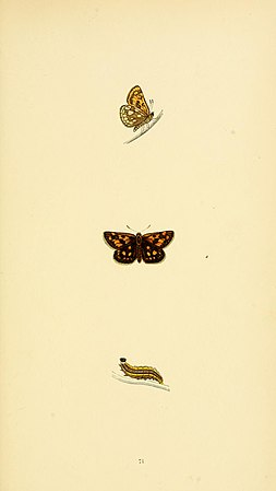 A history of British butterflies BHL14821406.jpg
